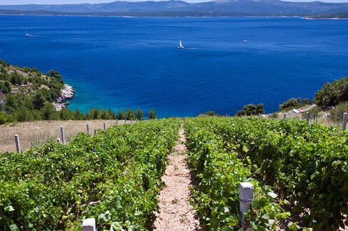 On our route we will visit seaside vineyards and taste local wine